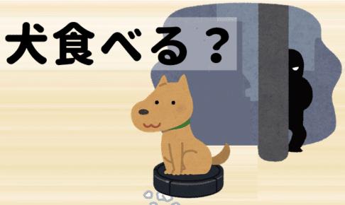 【台湾は野良犬を食べる?】あなたの知らない犬食文化の裏台湾