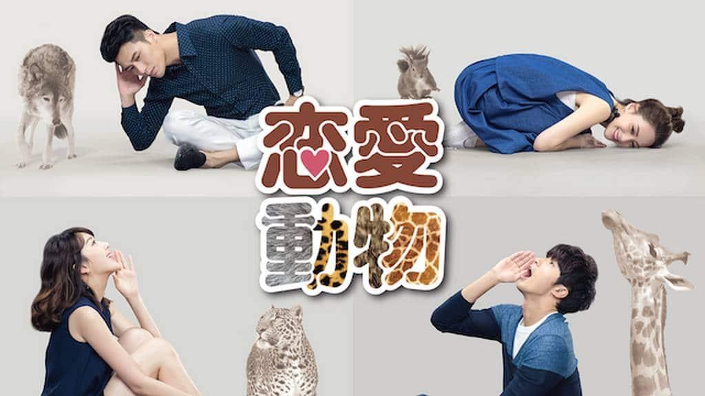 台湾ドラマ|恋愛動物の無料動画を1話から配信中のサービス【日本語字幕】
