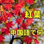 「紅葉」の中国語
