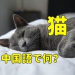 「猫」の中国語